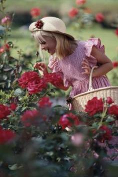 Цветы радости.jpg