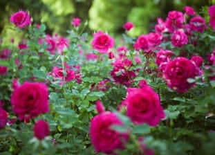 цветение.jpg